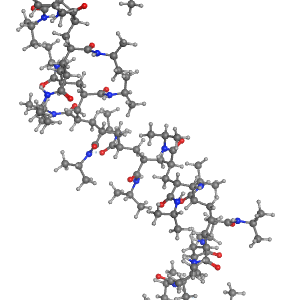 Molecular Dynamics Simulations of solvated poly(n-isopropylacrylamide) (PNIPAM)