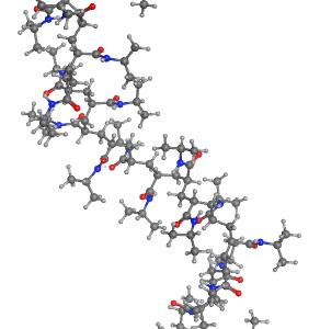 Molecular Dynamics Simulations of solvated poly(n-isopropylacrylamide) (PNIPAM)